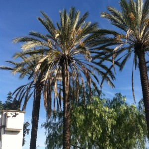 Palms Before
