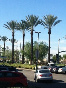 Palms After